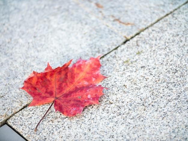 Foglia d'acero autunnale sul marciapiede. autunno in città.