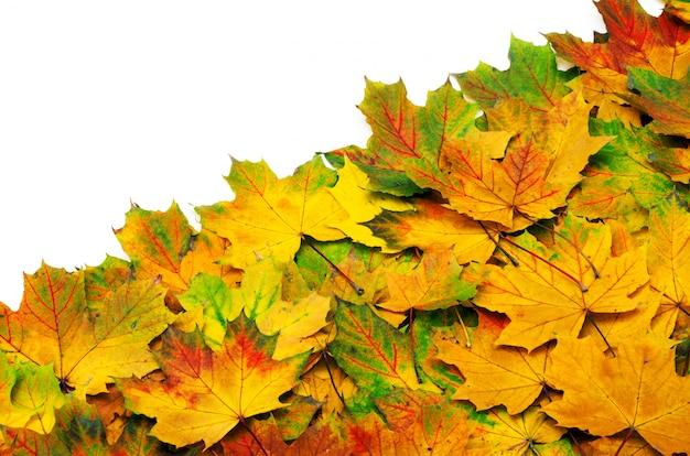 Foglie d'acero autunno isolato su un bianco