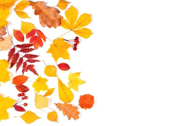 Foglie di acero autunnali su sfondo naturale di foglie da tavola in legno