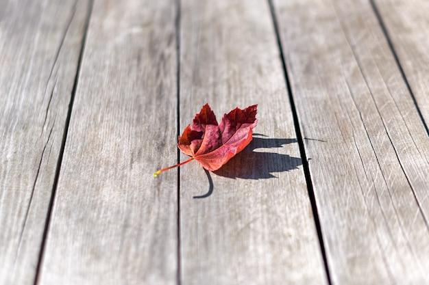 Foglia di albero di acero di autunno su fondo di legno, vista dall'alto