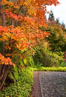 Alberi marple di autunno in giardino giapponese a berlino