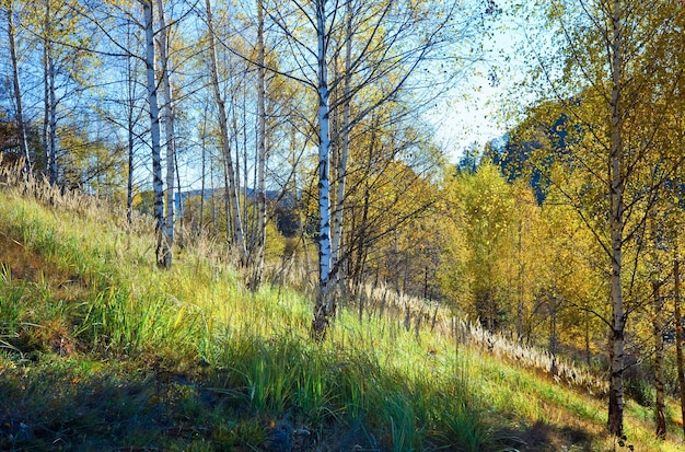 Autunno montagna nimchich pass (carpazi, ucraina) e bosco di betulle sulla collina.