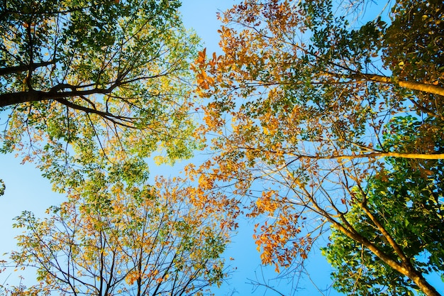 Autunno natura albero al tramonto natura sullo sfondo del cielo