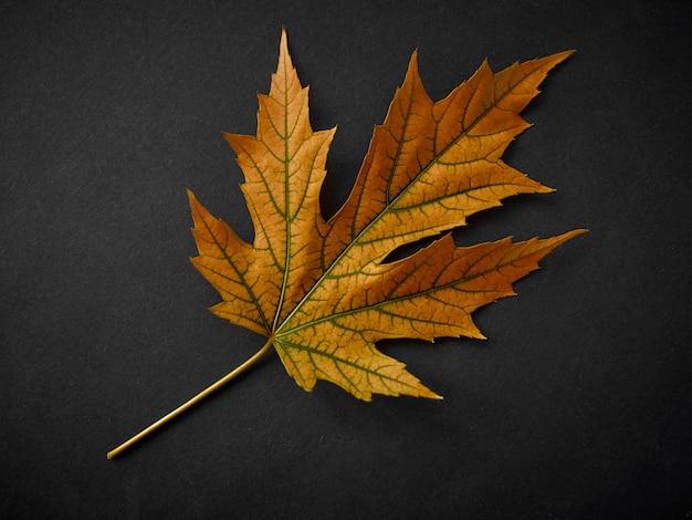 Foglia arancione di autunno sul nero