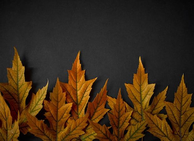 Foglie di arancio di autunno sul nero