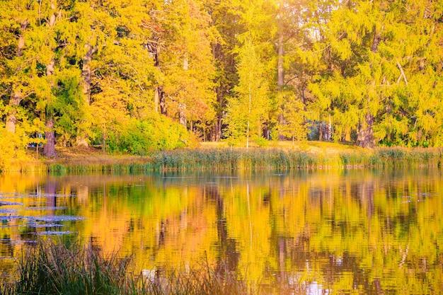 Paesaggio autunnale del parco con un lago autunno una nuova stagione bellissimo paesaggio alberi gialli p