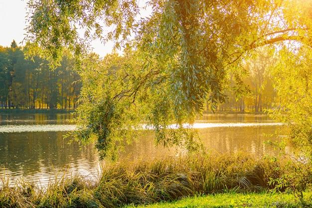 Paesaggio del parco autunnale con un lago. autunno. una nuova stagione. bel paesaggio. alberi gialli. foto per prodotti stampati. un articolo sull'autunno.