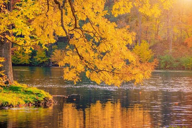 Paesaggio autunnale del parco con un lago autunno una nuova stagione bellissimo paesaggio