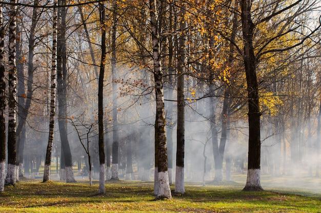 Parco autunnale dove vengono bruciate le foglie. inquinamento da idrocarburi
