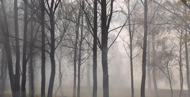 Parco d'autunno con nebbia misteriosa