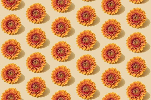 Motivo autunnale in colore giallo e arancione. fondo minimo del fiore della margherita d'autunno. layout creativo autunnale.