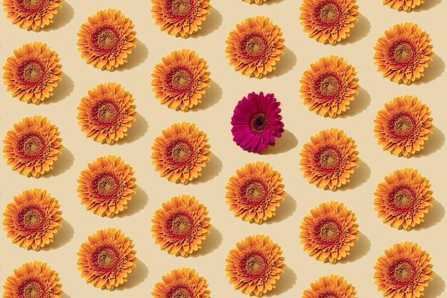 Motivo autunnale in colore giallo e arancione. molti fiori autunnali margherita sfondo minimo con un singolo fiore viola. layout creativo autunnale.