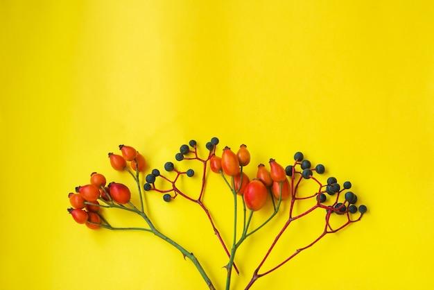 Cartolina d'autunno con cinorrodi e bacche blu su sfondo giallo. . cornice, copia spazio, posto per il testo. texture, sfondo autunnale tematico. disposizione piatta, layout