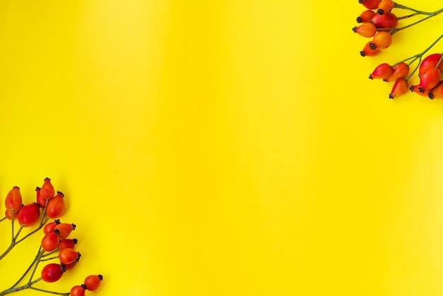 Cartolina d'autunno con cinorrodi su sfondo giallo. cornice, copia spazio, posto per il testo. texture, sfondo autunnale tematico. disposizione piatta, layout