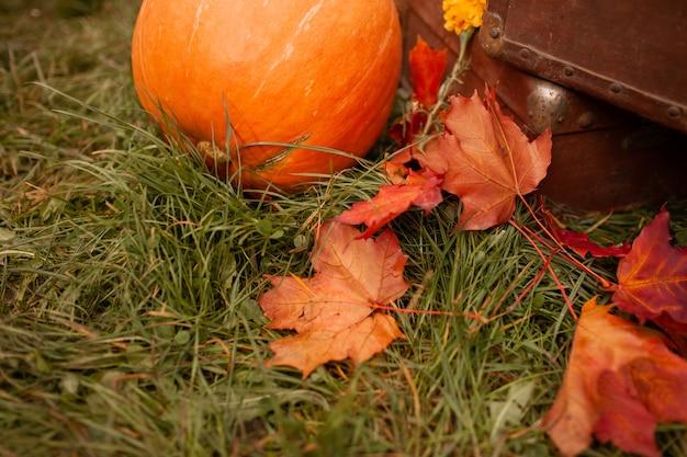 Zucca di autunno e foglie di acero cadute e vecchie valigie marroni che si trovano sull'erba