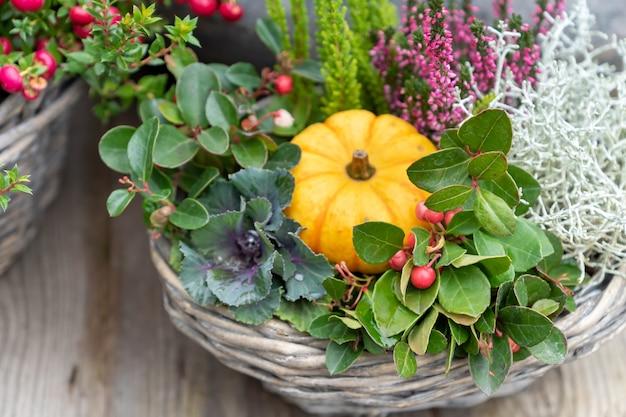 Zucca di autunno in un vaso di fiori