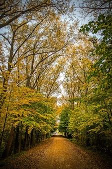 Autumn road alley in bielorussia