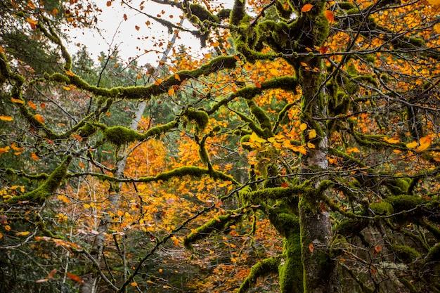 Scena autunnale nelle foreste di echo valley, aragona, spagna settentrionale