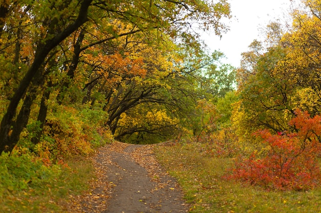 Sfumature di colore autunnali. foresta in luminosi colori autunnali.