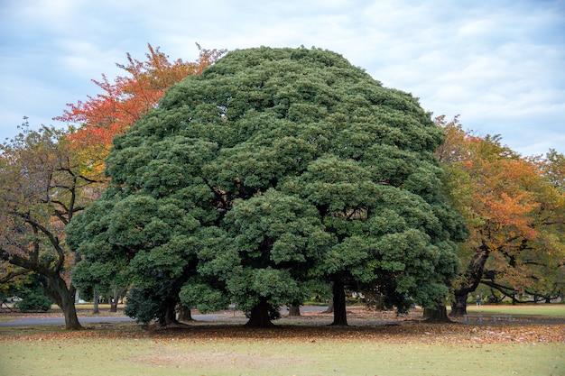 Autunno nel parco di shinjuku, tokyo, giappone