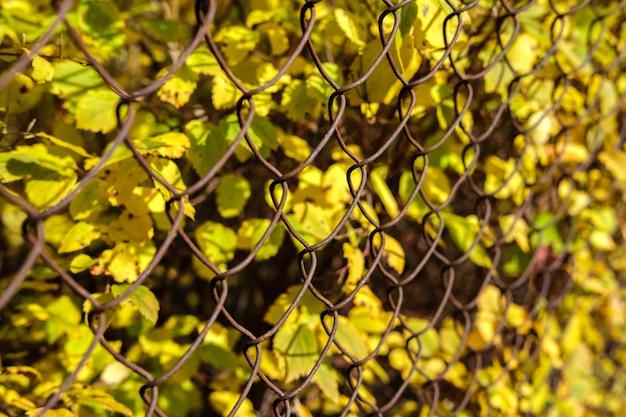 Piccole foglie gialle autunnali dietro un recinto fatto di vecchia rete metallica arrugginita, che si estende in lontananza in un colpo netto.