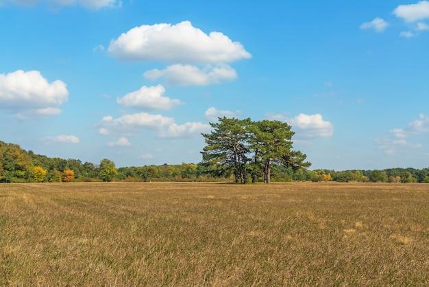 Vista del paesaggio naturale della steppa autunnale