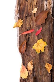 Superficie autunnale con foglie colorate su tavola di legno.