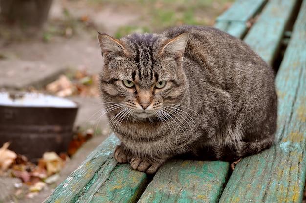 Gatto soriano autunno seduto su una panchina e guardando avanti