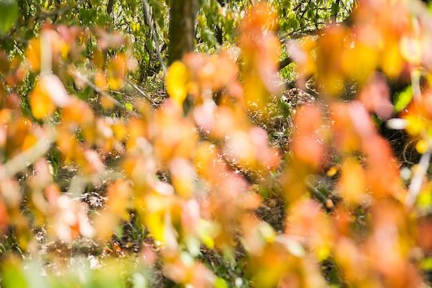 Foglie d'autunno dell'albero. foto sfocata. sfondo trama.