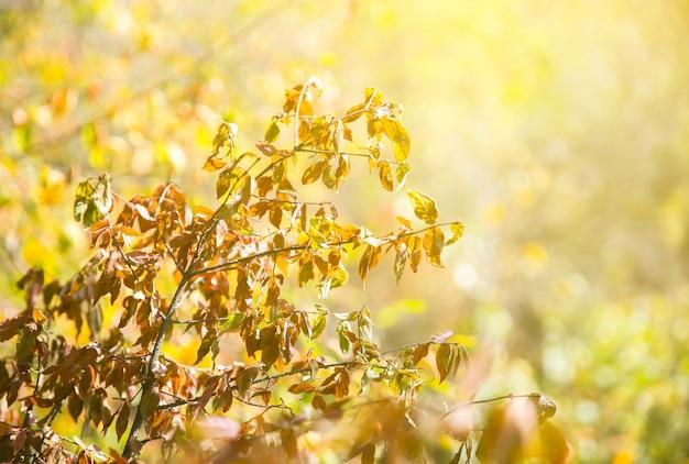 Foglie d'autunno dell'albero. sfondo trama. bella foto della natura. sfondo stagionale.
