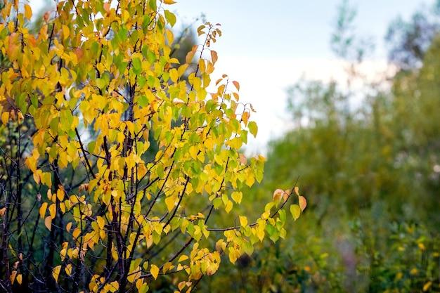 Albero d'autunno con foglie colorate nella foresta