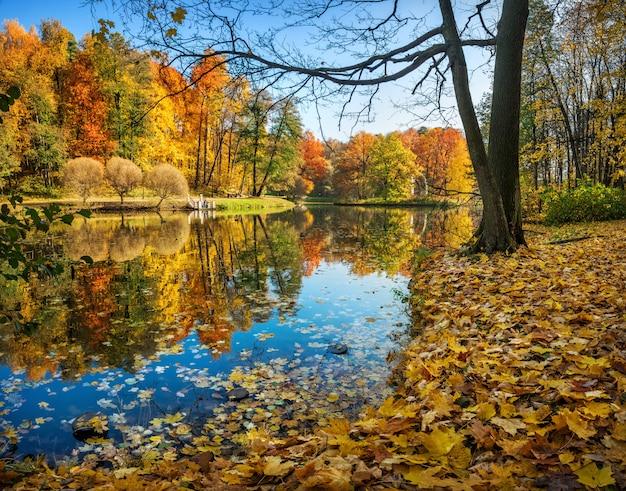 Gli alberi di autunno con la riflessione nello stagno di tsaritsyno parcheggiano a mosca