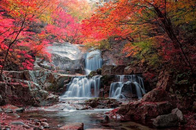 Vista autunnale in un parco di campagna in corea con foglie rosse