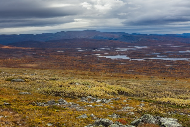 Vista autunnale del parco nazionale sarek, lapponia, contea di norrbotten, svezia, vicino al confine tra finlandia, svezia e norvegia. messa a fuoco selettiva