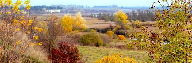 Vista autunnale con un albero di mogano in riva al fiume tra la vegetazione autunnale dorata. pittoresco paesaggio autunnale