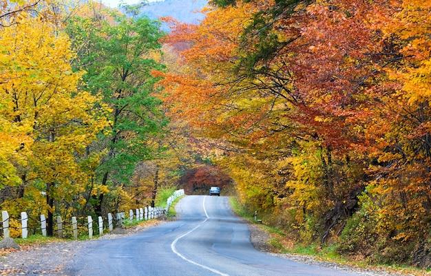 Strada secondaria tortuosa autunnale nella foresta di montagna