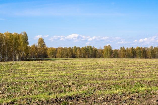 Foresta e campo gialli di autunno. cielo azzurro con nuvole sopra la foresta. la bellezza della natura in autunno.