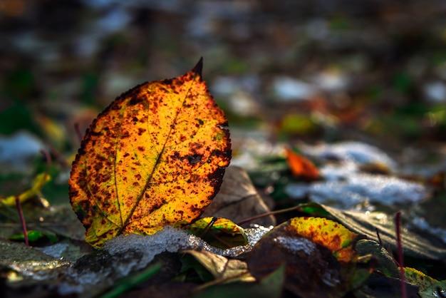 Foglia gialla di autunno e primo fondo della neve