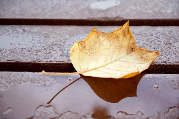 Foglia gialla autunnale su fondo di legno bagnato, scena naturale, all'aperto
