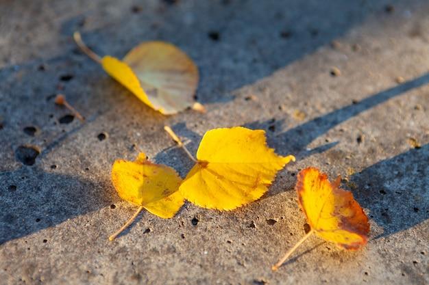 Foglie gialle autunnali sulla superficie della pietra al sole