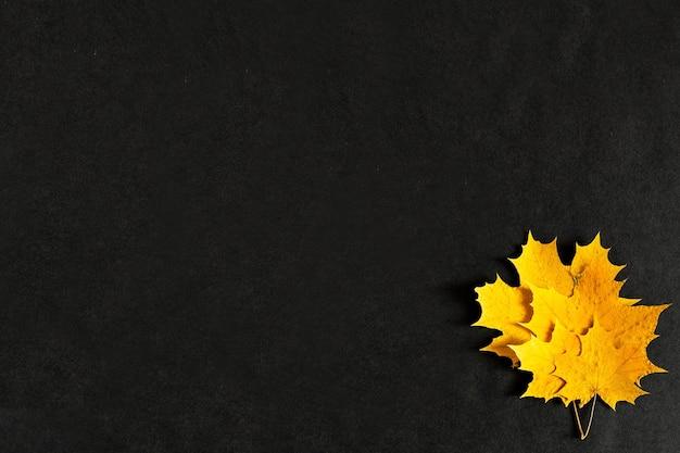 Foglie di acero giallo autunno su sfondo nero