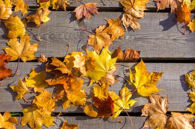 Le foglie di acero gialle di autunno si trovano sul vecchio pavimento di legno non dipinto. Foto Premium