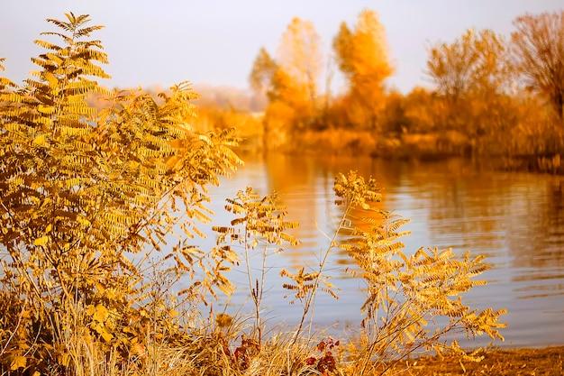 Alberi gialli autunnali sulla costa del fiume