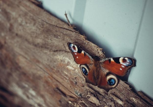 Farfalla autunnale su una tavola di legno.