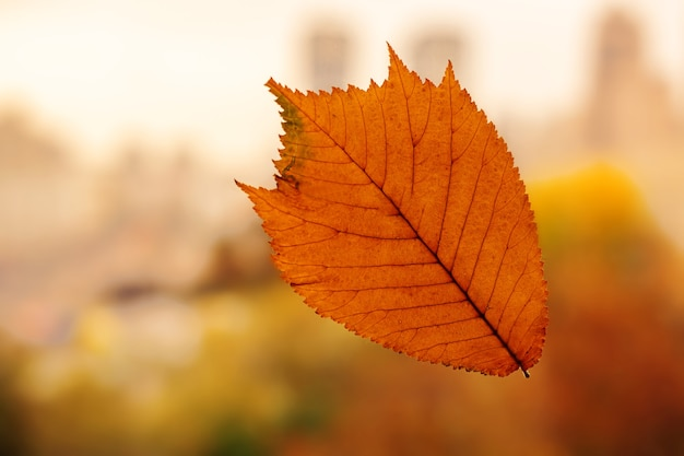 Sfondo di disegno foglia autunnale. colore giallo, arancio, marrone.