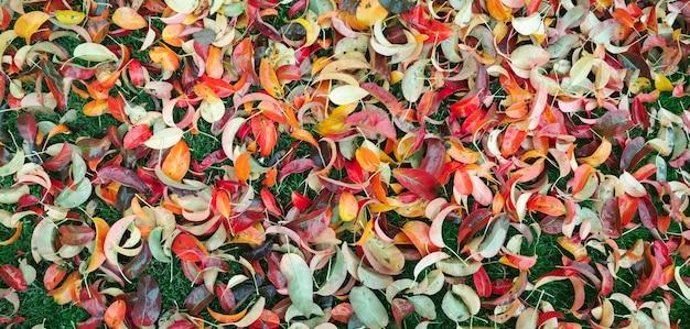 Foglie multicolori autunnali