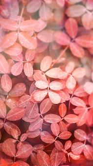 Sfondo di foglie rosse autunnali