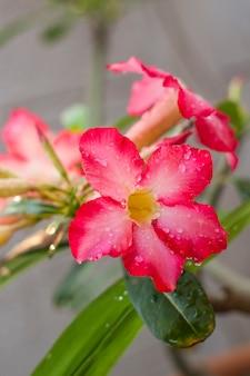 Fiore di azalea