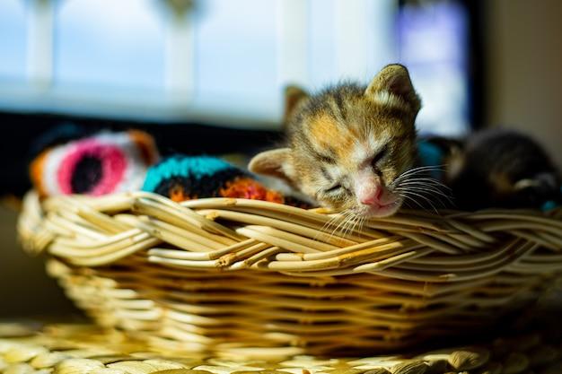 Il gatto dorme nel cestino a casa