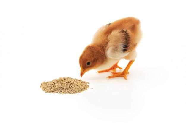 Pollo del bambino che mangia un pasto